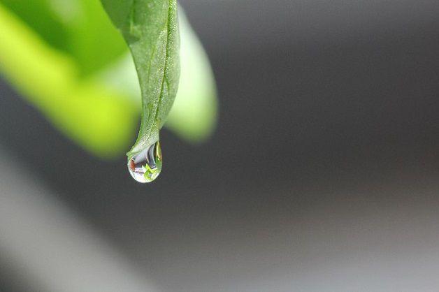 英語のことわざ【雨だれ石をうがつ】