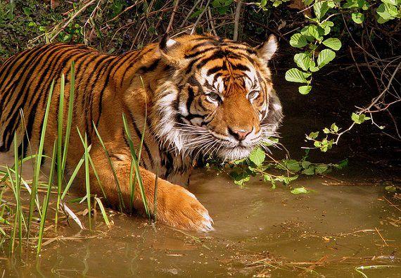 虎の尾を踏む 英語