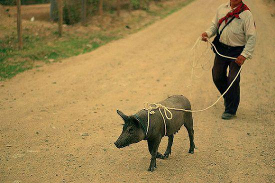 英語のことわざ【豚に真珠】