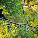 英語のことわざ【猿も木から落ちる】