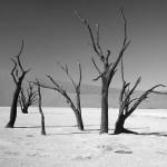 英語のことわざ【枯れ木も山のにぎわい】