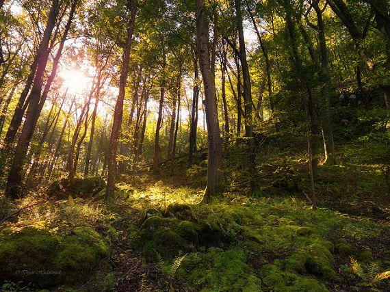 英語のことわざ【木を見て森を見ず】