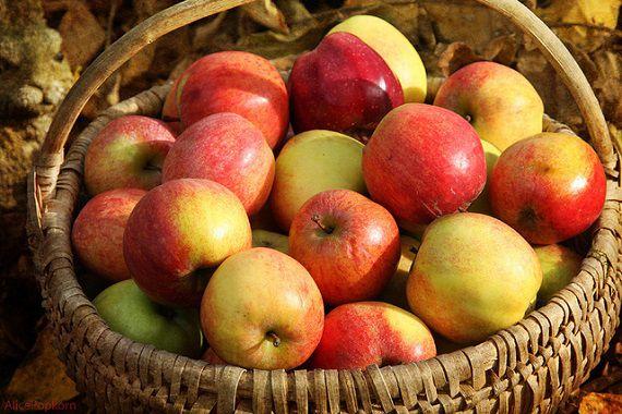 英語のことわざ【一日一個のリンゴで医者いらず】